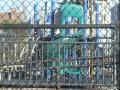Adams Street Playground 2