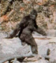 Frame 352 from Patterson-Gimlin film, claiming to show Bigfoot, October 20, 1967. (Beao via Wikipedia). Qualifies as fair use under US Copyright laws - low resolution picture.