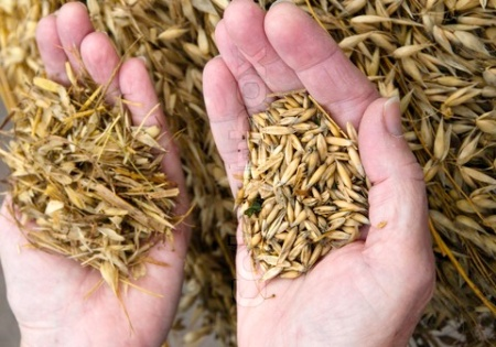 Separating chaff (left hand) from wheat (right hand), November 25, 2013. (http://www.colourbox.com/preview/).