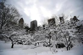 Snow covers trees in Central Park after a storm, New York City, December 28, 2013. (Emmanuel Dunand/AFP/Getty Images via http://www.nydailynews.com).