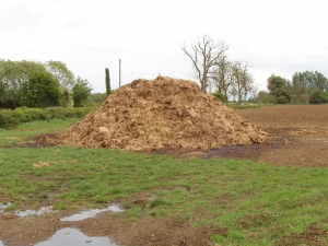 Dung heap mixed with farmyard straw, near Granborough, England, UK, May 12, 2007. (David Hawgood via Wikipedia). Released to public domain via Creative Commons 2.0.