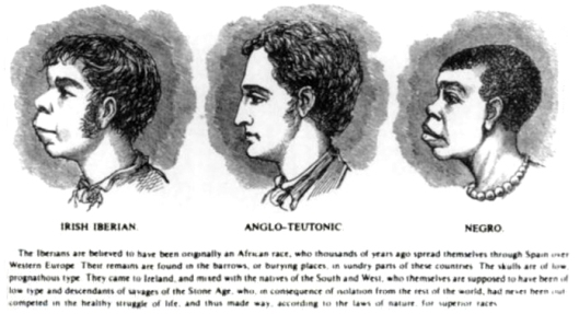 "Scientific racism, using ""evidence"" to compare the Irish to the African, by H. Strickland Constable, Harper's Weekly, 1899. (JasonAQuest via Wikipedia). In public domain."
