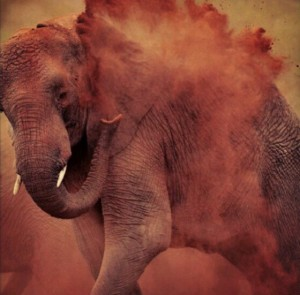 An elephant shaking off the dirt, circa 2012. JD Rucker via Pinterest.com).